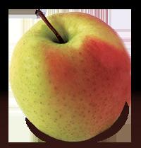 Golden Supreme apple (Bar Lois Weeks photo)