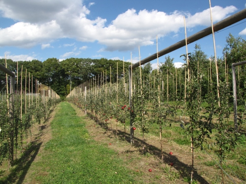 Ragged Hill Orchard, West Brookfield, Massachusetts (Russell Steven Powell photo)