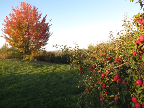 North Star Orchards, Madison, Maine (Russell Steven Powell photo)