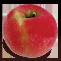 Pink Lady apple (Bar Lois Weeks photo)