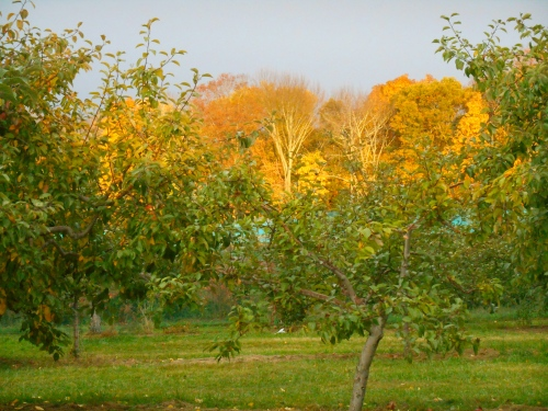 Lapsley Orchard, Pomfret Center, Connecticut (Bar Lois Weeks photo)