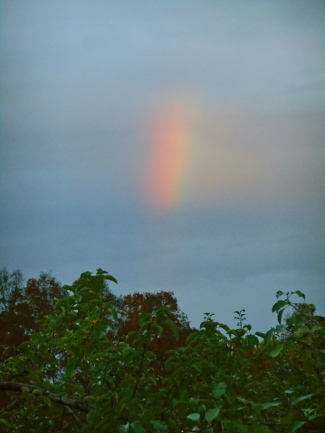 Rainbow, Lapsley Orchard, Pomfret Center, Connecticut (Bar Lois Weeks photo)