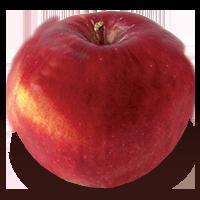 Winesap apple (Bar Lois Weeks photo)