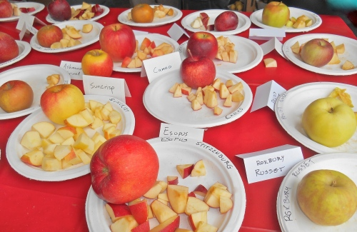 Fresh apples for sampling at Clarkdale Fruit Farms, Deerfield, Massachusetts, during Franklin County CiderDays. (Bar Lois Weeks photo)