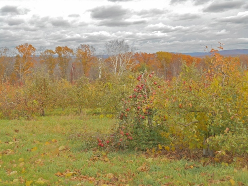 The view from Clarkdale Fruit Farms, Deerfield, Massachusetts, early November.  (Bar Lois Weeks photo)