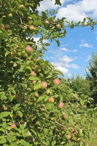 Brookfield Orchards, North Brookfield, Massachusetts (Bar Lois Weeks photo)