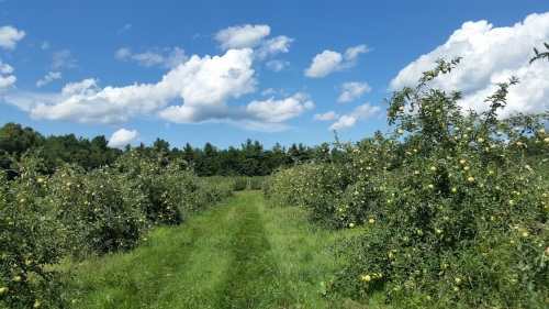 Carlson Orchards, Harvard, Massachusetts (Bar Lois Weeks photo)
