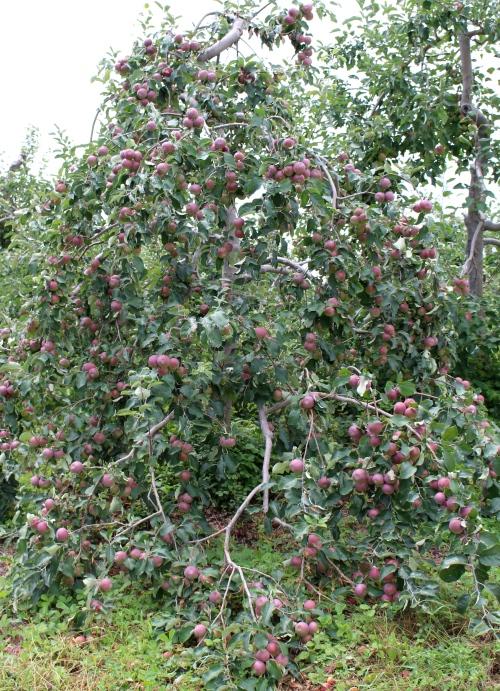 Red Apple Farm, Phillipston, Massachusetts (Russell Steven Powell photo)