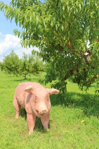 """Orchard Pig,""  by Susan Halls, 2015 ""Art in the Orchard,"" Park Hill Orchard, Easthampton, Massachusetts. (Russell Steven Powell photo)"